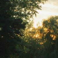 Запуталось солнце в деревьях... :: Тамара (st.tamara)