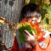 Букет  осенних листьев :: Фотогруппа Весна.