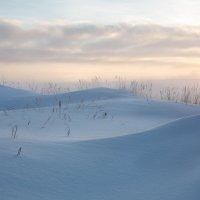 Зима и барханы... :: Sergey Apinis