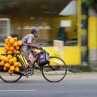 Купил кокосов! :: Edward J.Berelet