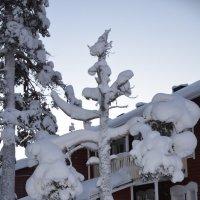 Снежный страж :: Ольга Оглоблина