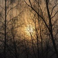 утро туманное :: linnud