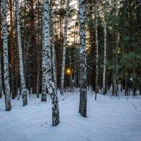"""Вечер по лесу гулял, лучик солнца потерял..."" :: Надежда"