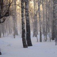 Сибирь . Туманный день -36 . :: Мила Бовкун