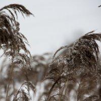 Снег...  снег...  снег.... :: Валерия  Полещикова