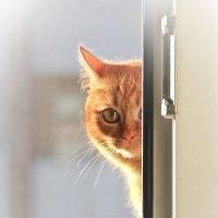Солнечный котенок :: Elena Ignatova