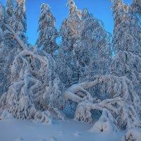 Снежные кружева :: vladimir Bormotov