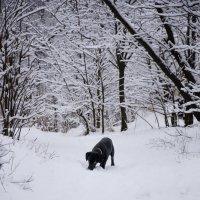 Черный на белом... :: Наталья Костенко