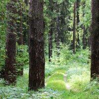 лес :: Краснов  Ю Ф