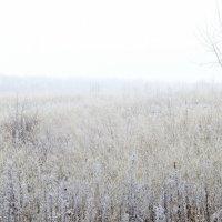 природа зимой :: Татьяна