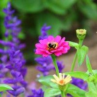 Цветы :: TATYANA PODYMA