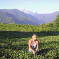 Чайная плантация :: Tata Wolf