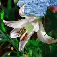 Любимые цветы. :: Виктор Коршунов