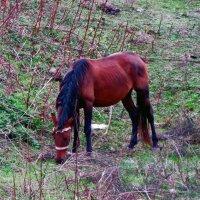 Лошадь как символ :: Наталья Джикидзе (Берёзина)