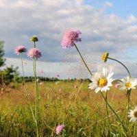 В летнем поле :: Павлова Татьяна Павлова