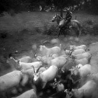 Пастух :: Алексей Окунеев