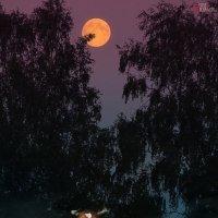 Луна и корова (вот так незамысловато) :: Сергей Михайлов