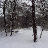 IMG_1186 - Московская зима как она есть :: Андрей Лукьянов