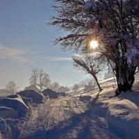 Морозный денёк :: Alexander Andronik