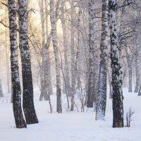 ...про туман ... :: Мила Бовкун