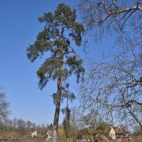 Дерево :: Андрей ТOMА©