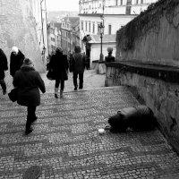 Черно-белая жизнь в полоску с зигзагами :: 2сello Olga