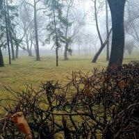 туман :: Julya .