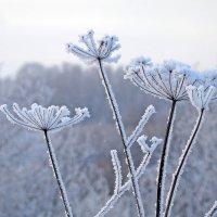Мороз в январе :: Анатолий Смирнов