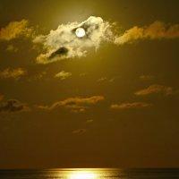Желтоглазая ночь :: M Marikfoto