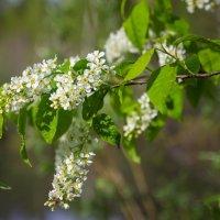 Весна :: Александр