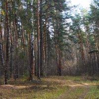 В осеннем лесу. :: Маргарита ( Марта ) Дрожжина