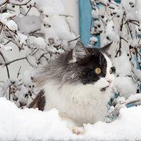 Холодно... но интересно)) :: Елена Васильева