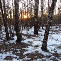 1 января 2014 (прошлая зима) :: Андрей Лукьянов