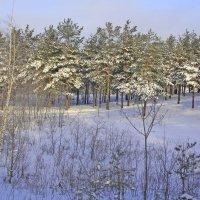 Зимняя картинка. :: Николай Масляев