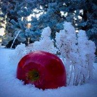 Яблоко на снегу :: Мария Корнилова