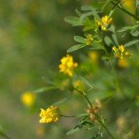 Солнечные цветы :: Lou Rence