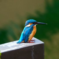 Знающие!!! Подскажите, как зовут эту птичку??? :: Сергей Рычков