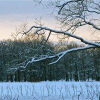 зимушка-зима :: Елена