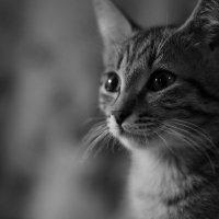 Любопытство.. :: Мария Истомина