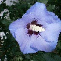 Оттенки цвета.... :: Алёна Савина