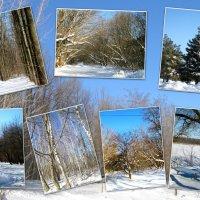 Морозный и снежный февраль 2014... :: Тамара (st.tamara)