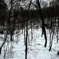 Зимний вечер в Ботаническом саду Фото №5 :: Владимир Бровко