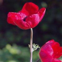цветы :: Sergey Kirillov