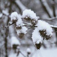 Зимний букет :: Ирина