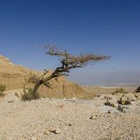 Arava desert :: Alex Krasny