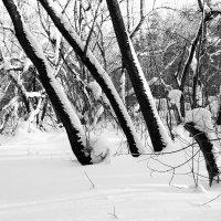 Зима (ч/б) :: Евгения Каравашкина