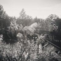 Поле мостик :: Александр Маклаков