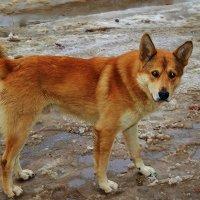 Собака с грустными глазами :: Валентина Пирогова