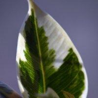 когда же зеленью засветится весна... :: Евгений Фролов