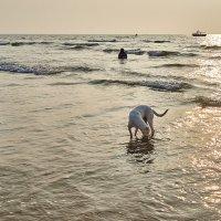 Закатнопляжная собака :: Val Савин
